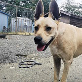 Pets for Adoption | CRD