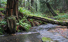 colwood creek 7  220x136 hh
