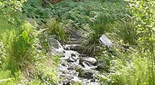 Bee Creek Watershed