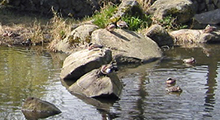 Bowker Creek Watershed