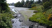 Cecelia Creek Watershed