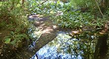 Colwood Creek Watershed