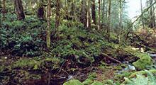 Craigflower Creek Watershed