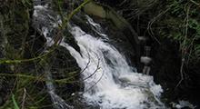 Millstream Creek Watershed