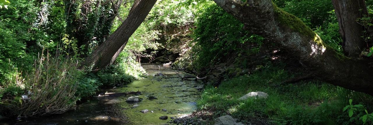 Bowker Creek Initiative