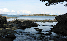 Rocky shores and marine ecosystems at the mouth of Bowker Creek where it enters Oak Bay