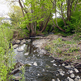 Bowker Creek through Browning Park in the District of Saanich
