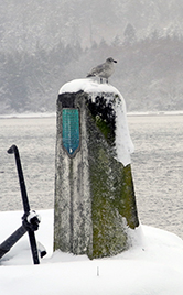 Gull on snowy monument