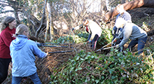 Volunteer on Projects