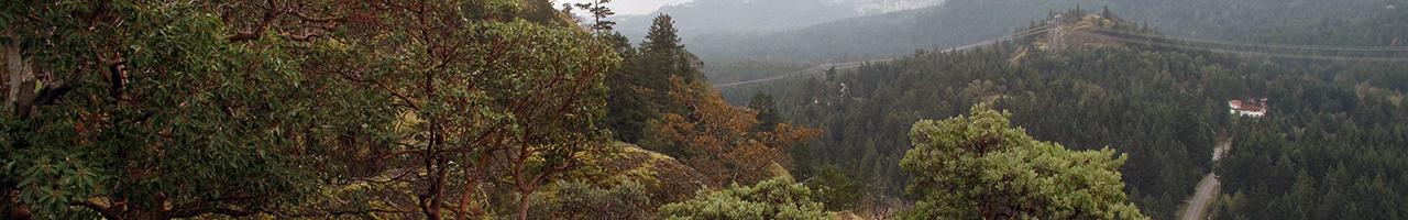 Lone Tree Hill Regional Park