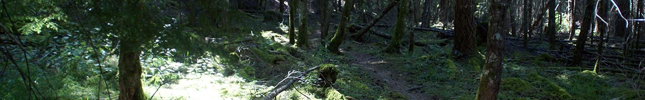 Trustees Trail