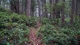 Armand Way Trail