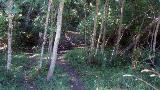 Bulman Trail