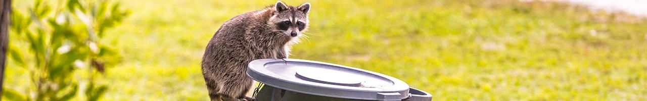 Food Waste and Wildlife