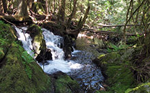 goldstream-flowingcreek