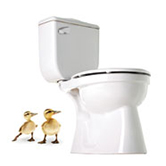 toilet-ducks-sq